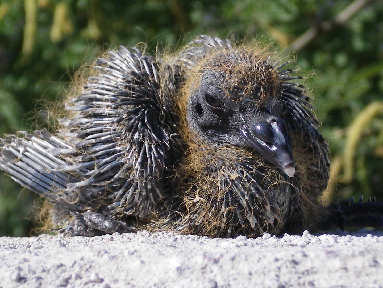 rescue faq tucson wildlife center