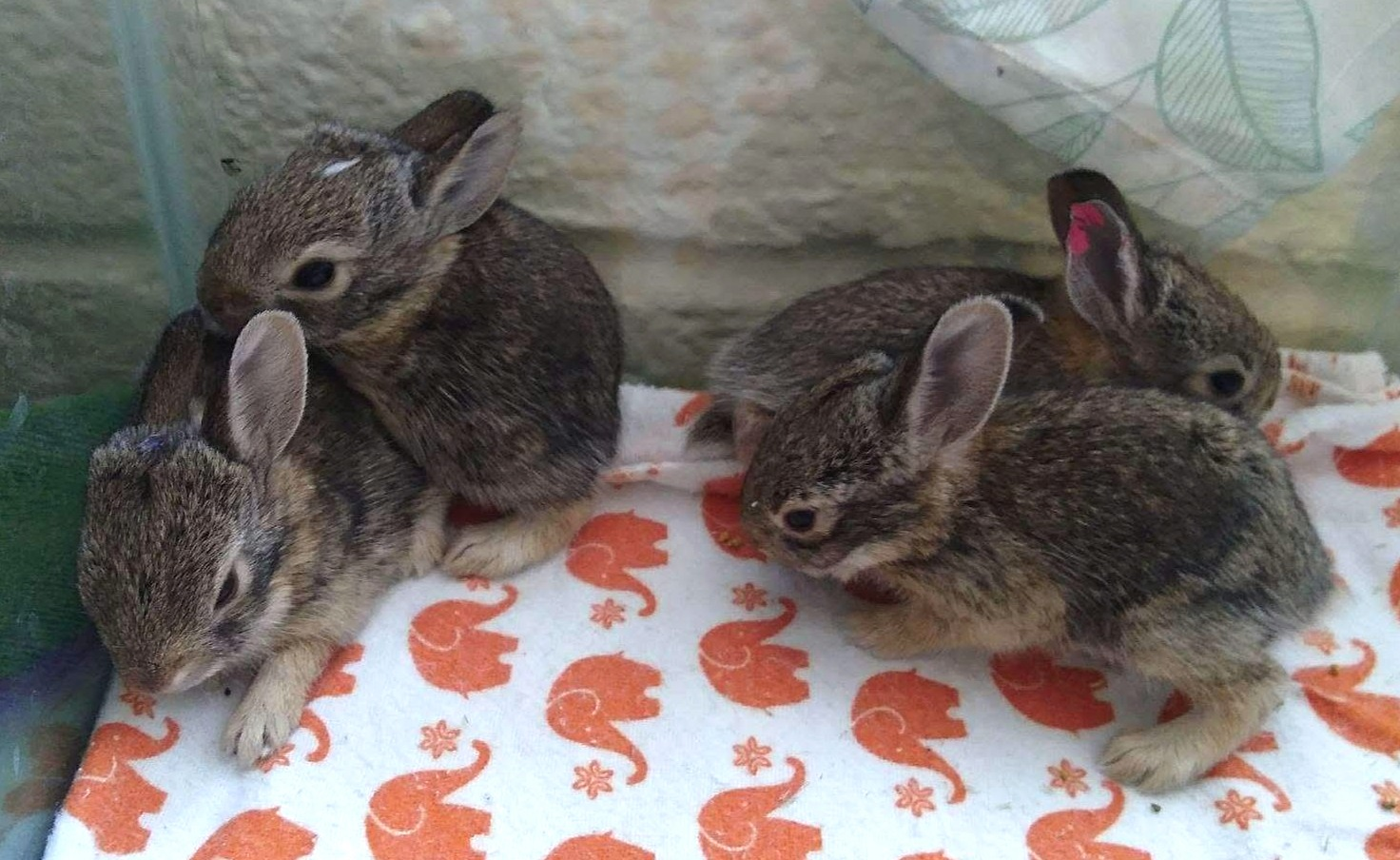 Help Save A Bunny This Easter Tucson Wildlife Center